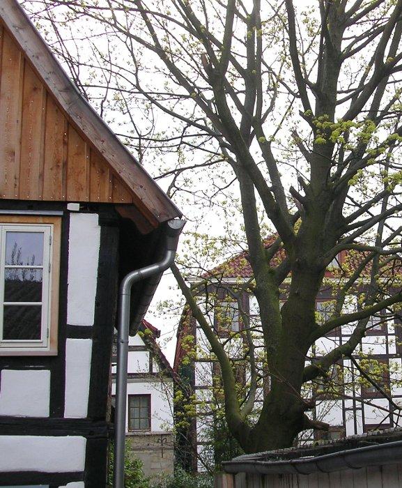 Foto: Fachwerkhäuser inmitten der Oberen Altstadt