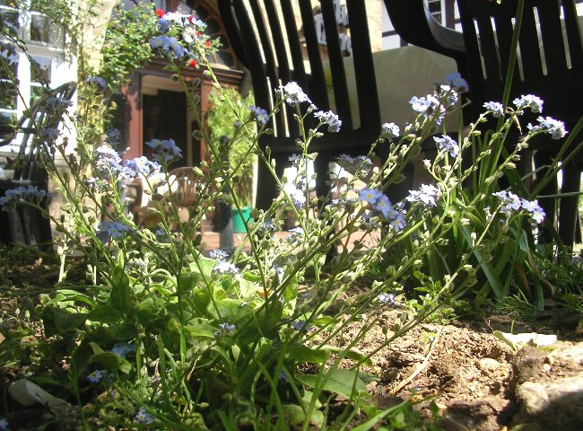 Foto: Blühende Pflanze an einem sonnigen Frühlingstag