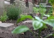 Blick über Pflanzen im Beet