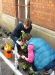 Stefan und Bettina beim ersten Setzen von Pflanzen
