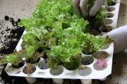 Eine Palette Jungpflanzen