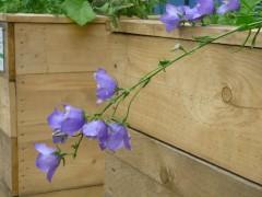 Heruntergebogene Blüten