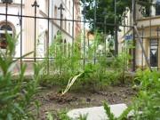 Blick in die Ritterstrasse aus der Sicht einer Pflanze