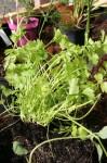 Die Pflanzen sind auf die Kästen verteilt worden