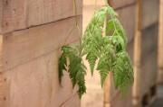 Das Grün einer Pflanze ragt über den Kastenrand