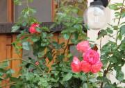 Begrünter Eingangsbereich eines Hauses