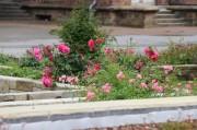 Ein bepflanzter Außenbereich in der Oberen Altstadt