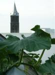 Eine Pflanze rankt über die Martinihaus-Dachkante