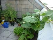 Pflanzen in Töpfen auf dem Dachbalkon