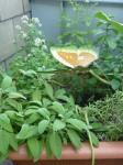 Grosser Topf mit Kräuterpflanzen