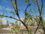 Das Stadtteilprojekt Helle Oase in Berlin-Hellersdorf