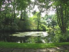 Teich in der Stadt