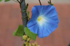 Eine Blüte in hübscher blauer Farbe