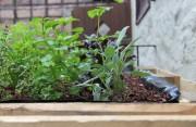 Bepflanzung im hinteren Teil