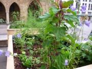 Vorn Urban Gardening, hinten  das Mindener Rathaus