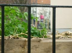 Blick durch das Geländer neben dem Pflanzkasten an der Fröbelstrasse