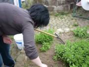 Gärtnerin Andrea legt mit  der Arbeit los.