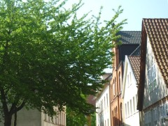 Hausdächer in der Altstadt