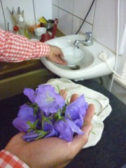 Essbare Blüten der Glockenblume