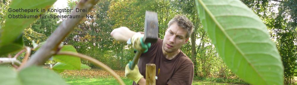 Goethepark: Peter vom BUND Minden versenkt einen Holzpfahl im Rasen.