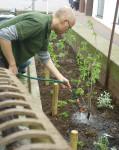 Burkhard wässert  die Newcomer im Beet